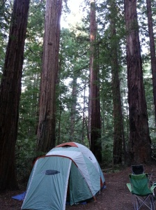 Camping amongst the redwoods