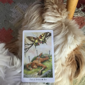 "The ""Rest"" card from the Wildwood Tarot on my resting pup"